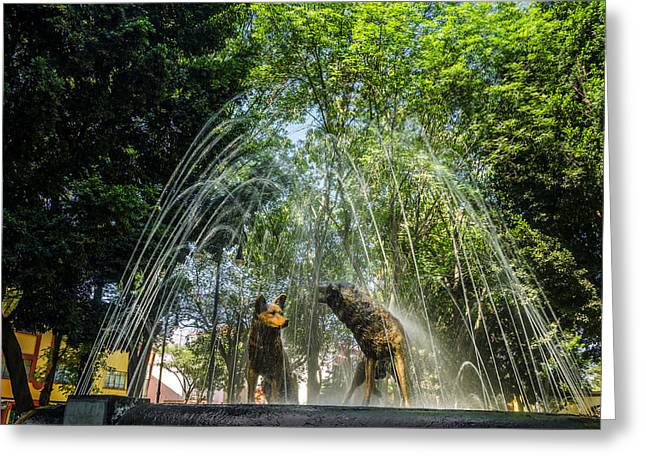 Mexico City Greeting Cards - Dog Fountain Greeting Card by Jess Kraft