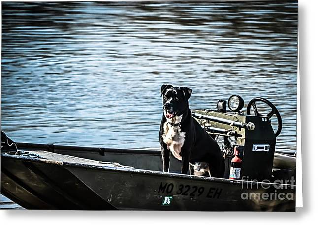 Dog In Lake Greeting Cards - Dog Gone Fishing Greeting Card by Peggy  Franz