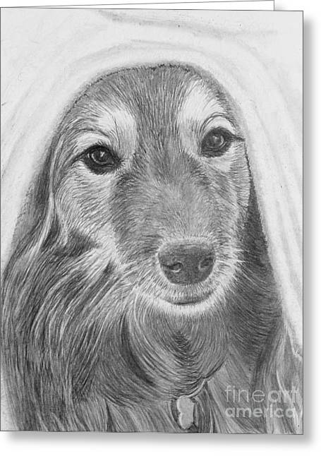 Maia Greeting Cards - Dog in a Blanket Greeting Card by Jacqueline Barden