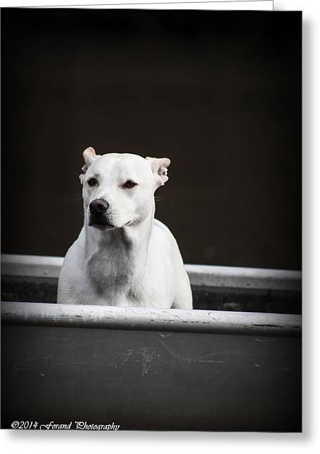 Dog In Lake Greeting Cards - Dog In Boat Greeting Card by Debra Forand