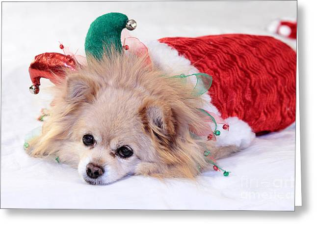 Spoiled Greeting Cards - Dog In Christmas Costume Greeting Card by Charline Xia