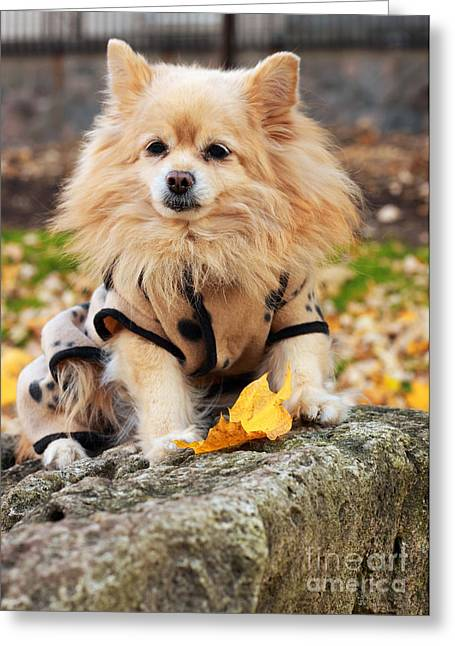 Gold Jacket Greeting Cards - Dog in Golden Autumn Greeting Card by Charline Xia
