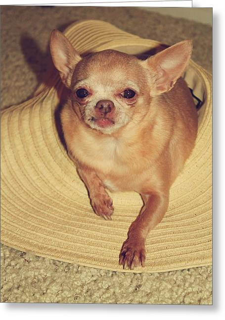 Chihuahua Portraits Greeting Cards - Dog in the Hat Greeting Card by Laurie Search