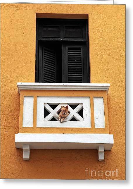 Dog Greeting Card by John Rizzuto
