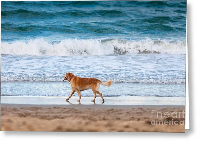 Martin County Greeting Cards - Dog Greeting Card by Juan  Silva