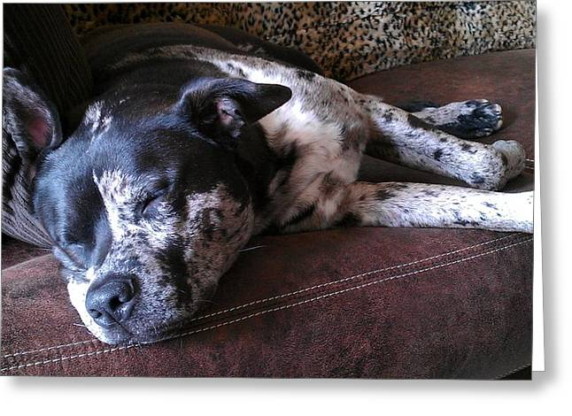Watchdog Greeting Cards - Dog Nap Greeting Card by Kenny Glover