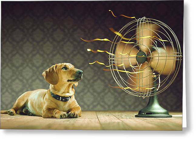 Dog Next To Electric Fan Greeting Card by Ktsdesign