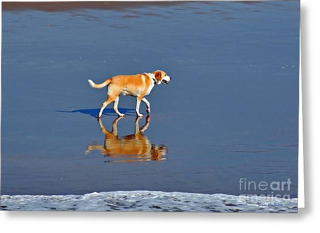 Susan Wiedmann Greeting Cards - Dog on Water Mirror Greeting Card by Susan Wiedmann
