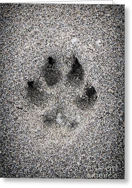 Dog Beach Print Greeting Cards - Dog paw print in sand Greeting Card by Elena Elisseeva