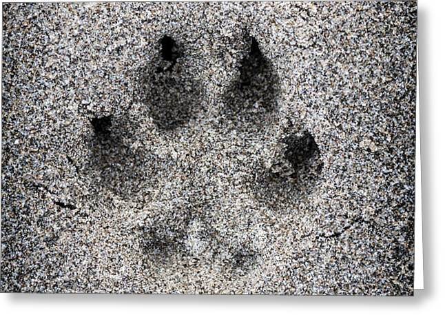 Dog paw print in sand Greeting Card by Elena Elisseeva