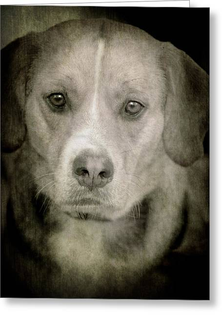 Dog Posing Greeting Card by Loriental Photography
