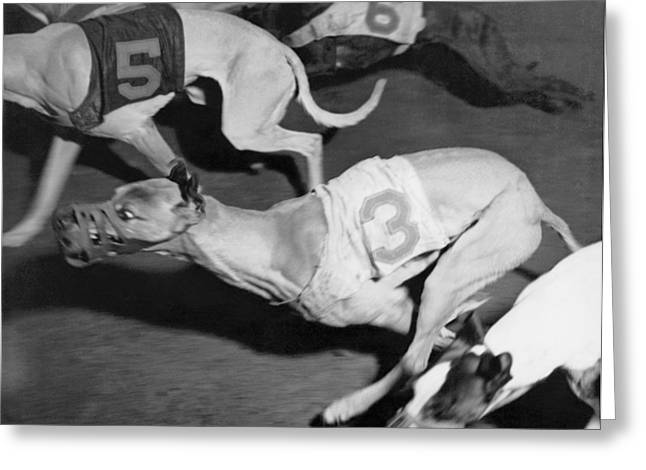 Dog Racing Track Greeting Card by Underwood Archives