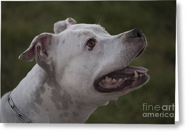 Dogs Pyrography Greeting Cards - Dog Greeting Card by Radivoj  Cvetojevic