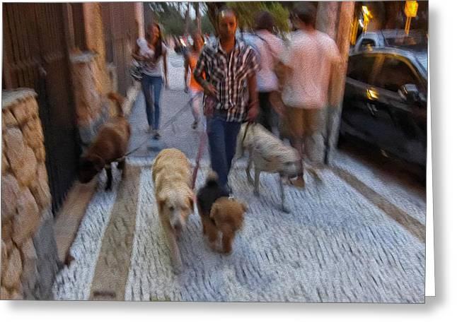 Dog Walker Greeting Cards - Dog Shepherd - Sao Paulo Greeting Card by Julie Niemela