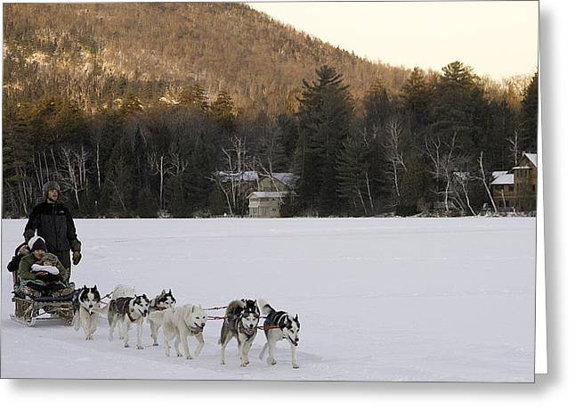 Dog In Lake Greeting Cards - Dog Sledding Greeting Card by Joanna Madloch