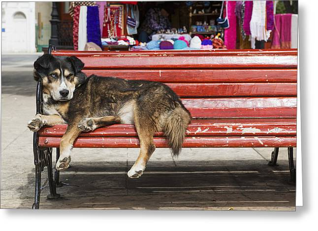 Lazy Red Dog Greeting Cards - Dog Sleeping On A Red Bench Punta Greeting Card by Remsberg Inc