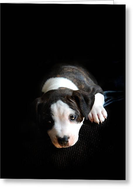 Dog-tired Greeting Card by Mark Rogan