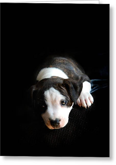 Staffordshire Bull Terrier Greeting Cards - Dog-tired Greeting Card by Mark Rogan