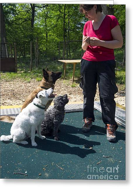 Cognition Greeting Cards - Dog Trainer, Wolf Science Center, Austria Greeting Card by Louise Murray