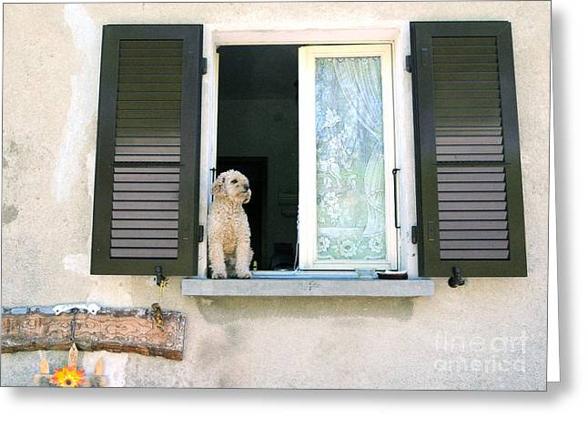 Dog In Window Greeting Cards - Dog waiting for owner Greeting Card by Haleh Mahbod