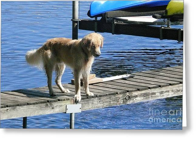 Golden Reteivers Greeting Cards - Dog Watching Fish Greeting Card by Betsy Cotton