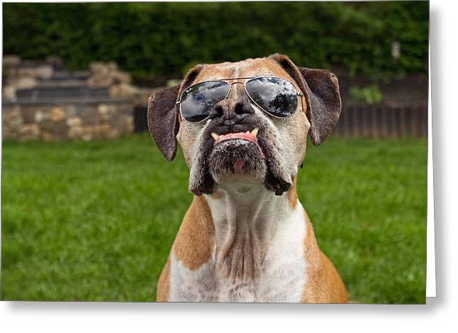 Bully Greeting Cards - Dog Wearing Sunglass Greeting Card by Stephanie McDowell