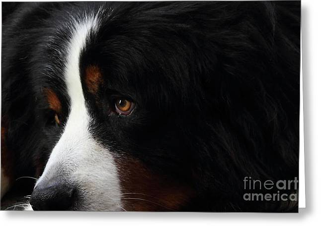 Dog Greeting Card by Wingsdomain Art and Photography
