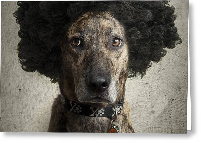 Dog With a Crazy Hairdo Greeting Card by Chad Latta
