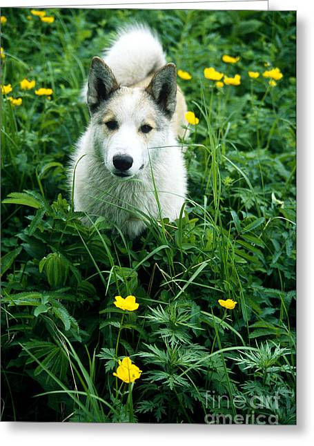 Domesticated Flower Greeting Cards - Dog With Flowers Greeting Card by Mark Newman