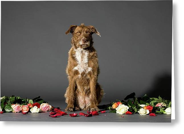 Dog With Flowers Greeting Card by Photostock-israel
