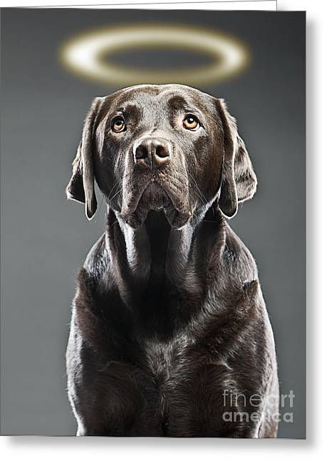 Pet Angels Greeting Cards - Dog with Halo Greeting Card by Justin Paget