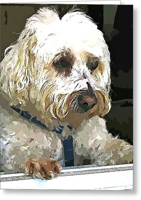 Dog In Window Greeting Cards - Doggie In The Window Greeting Card by Judy Palkimas