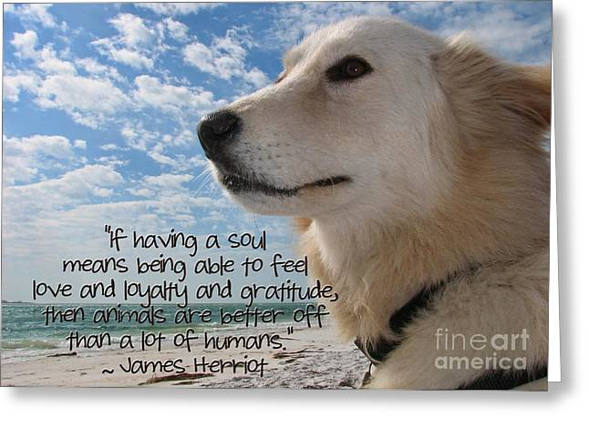 Dog Beach Card Greeting Cards - Doggie Soul Greeting Card by Peggy J Hughes