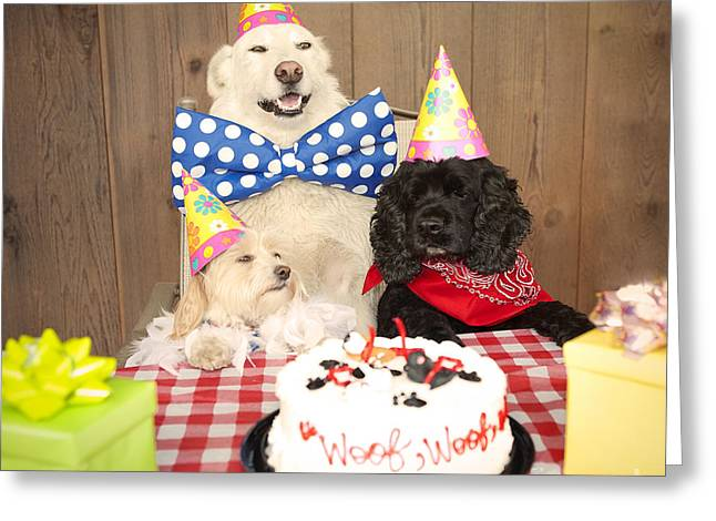 Mixed Labrador Retriever Greeting Cards - Doggy Birthday Party Greeting Card by Jan Tyler