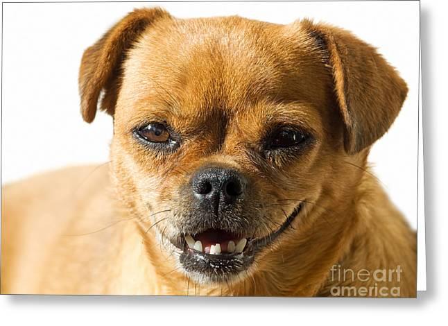 Skewed Greeting Cards - Doggy portrait Greeting Card by Sinisa Botas