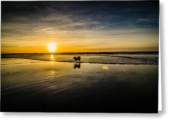 Doggy Sunset Greeting Card by Puget  Exposure