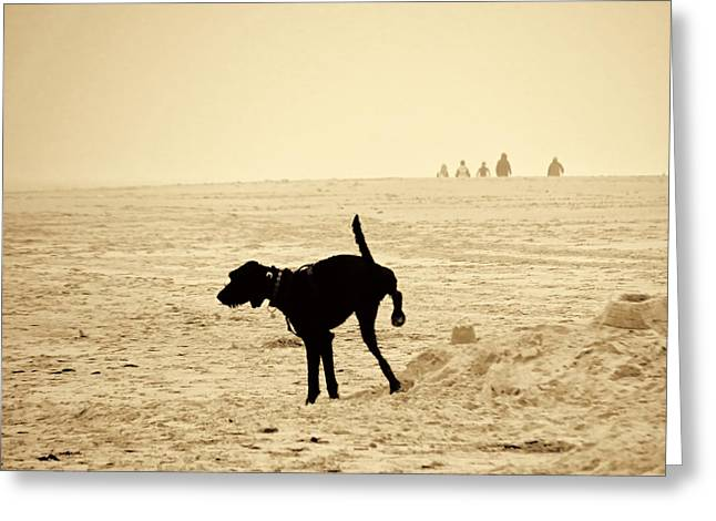 Sea Dog Greeting Cards Greeting Cards - Doggys special location Greeting Card by Nicole Frischlich