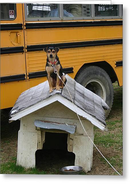 Doghouse Greeting Cards - Doghouse Greeting Card by Nina Fosdick