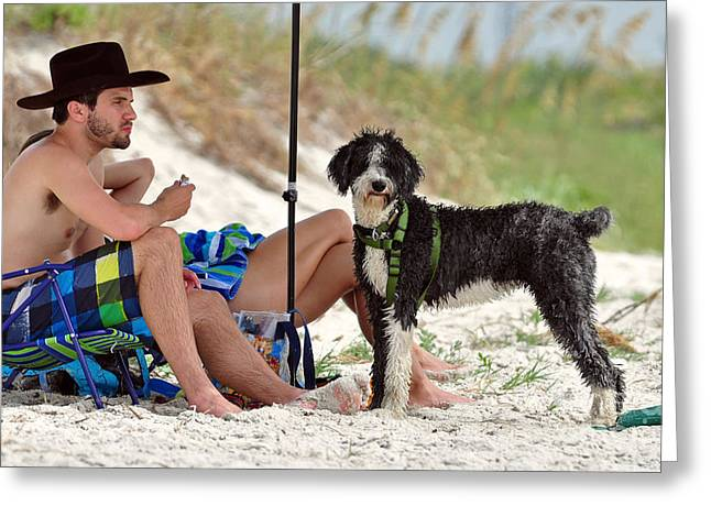 Dogie Greeting Cards - Dogie Beach  Greeting Card by Davids Digits