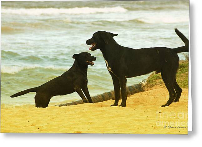 Dogs Are Love Greeting Card by Elena Comens