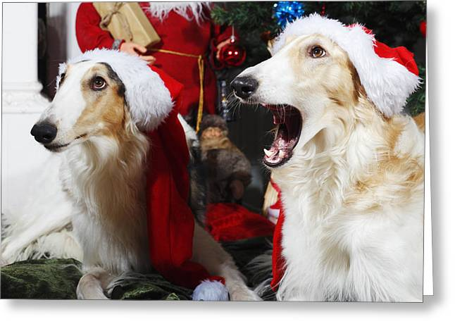 Sight Hound Greeting Cards - dogs Borzoi puppies and Christmas greetings Greeting Card by Christian Lagereek