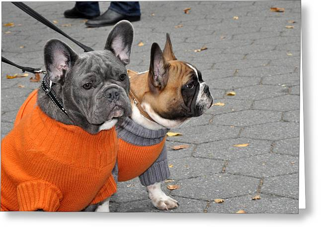 Dog Sweaters Greeting Cards - Dogs in Sweaters Greeting Card by Diane Lent