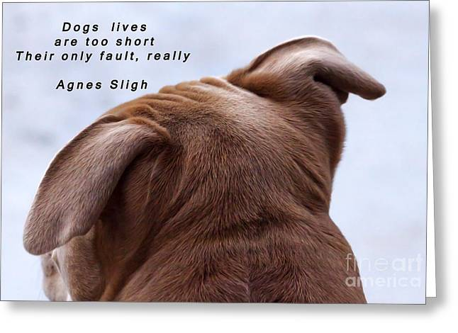 Framed Pit Bull Print Greeting Cards - Dogs Lives Are Too Short Greeting Card by Janice Rae Pariza