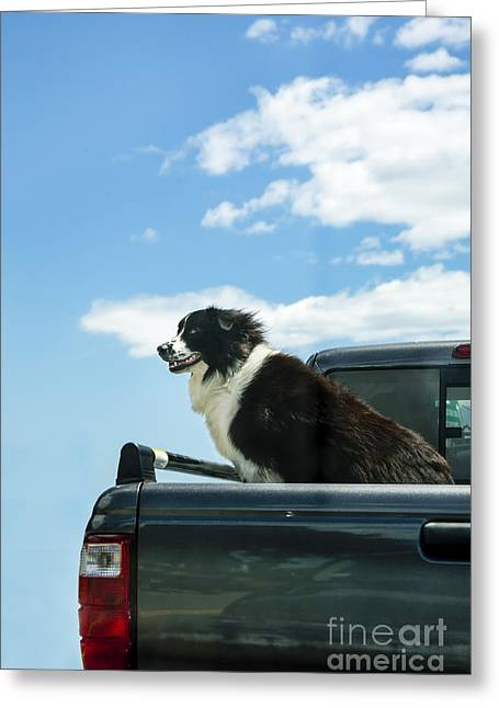 Dogs Love Trucks Greeting Card by Diane Diederich