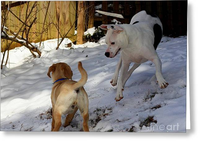 Dogs In Snow. Greeting Cards - Dogs Playing Greeting Card by Patti Whitten
