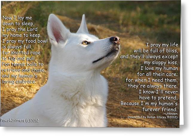 Paws4critters Photography Greeting Cards - Dogs Prayer Greeting Card by Robyn Stacey