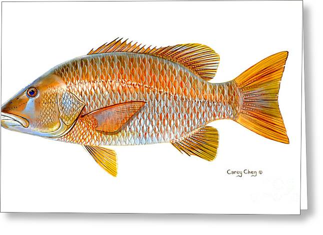 Dogtooth Snapper Greeting Card by Carey Chen