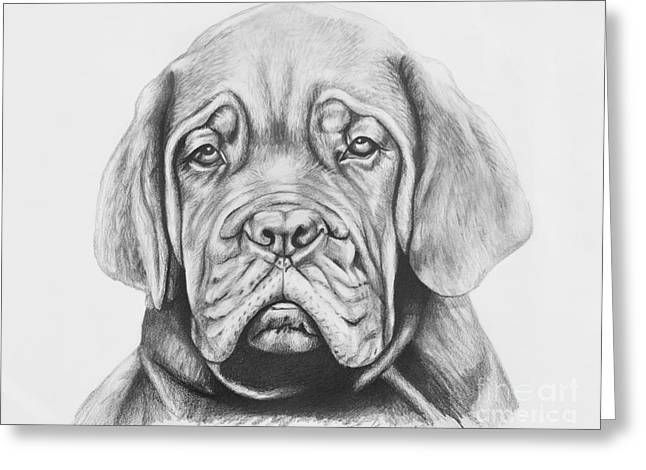Puppies Drawings Greeting Cards - Dogue de Bordeaux Dog Greeting Card by Lena Auxier