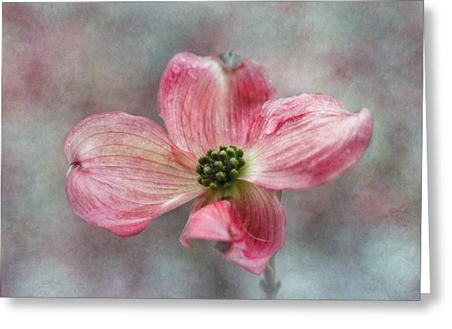 Dogwood Blossom Greeting Cards - Dogwood Greeting Card by Angie Vogel