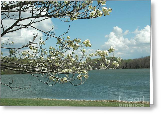 Dogwood Lake Greeting Cards - Dogwood at Freeman Lake Greeting Card by Steven Townsend